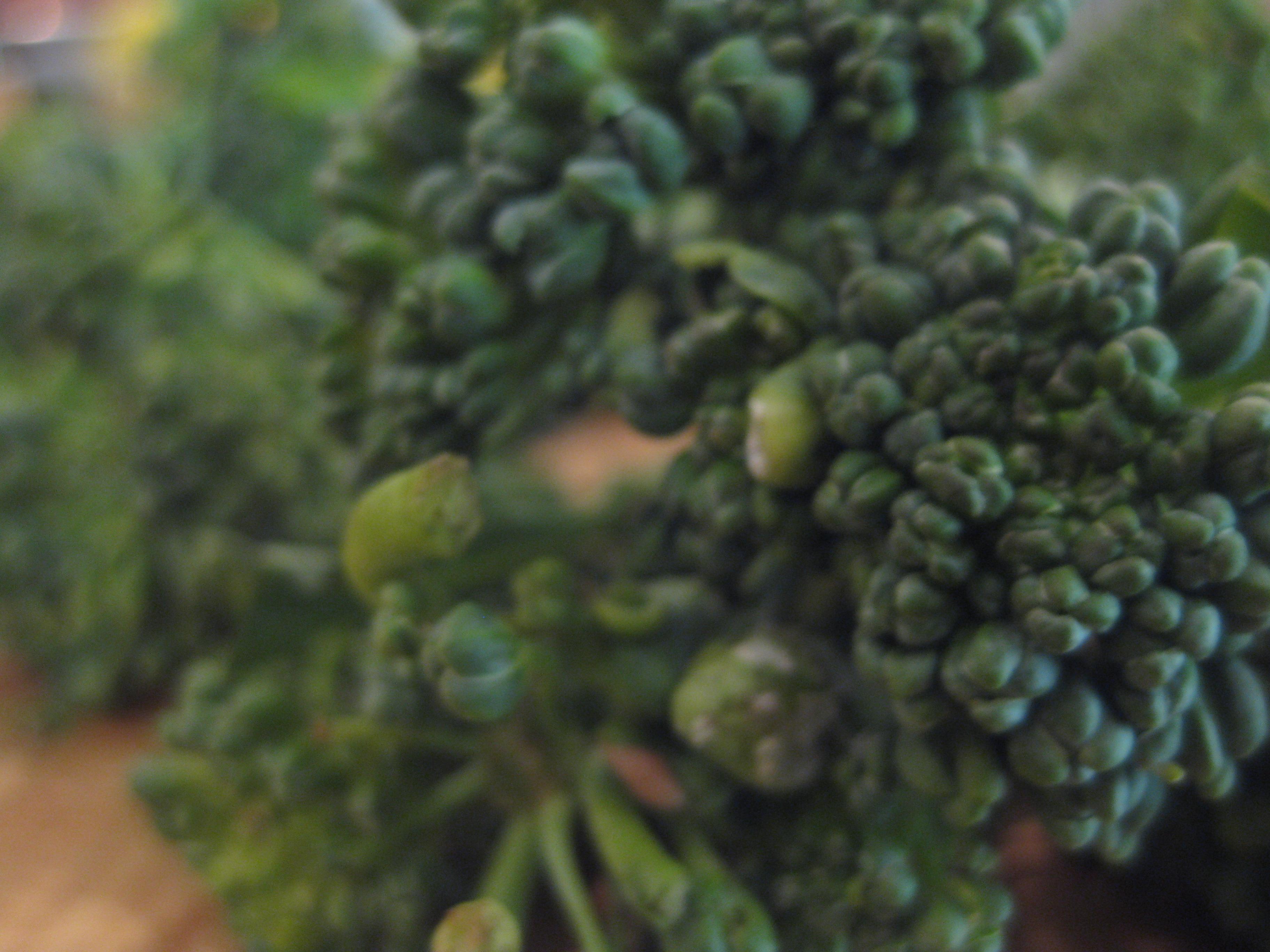 BroccoliniMacro